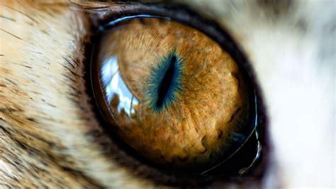 cat eye care we cat eye