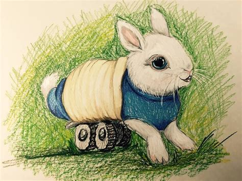 bunny sock wheelchair this paralyzed baby bunny named wheelz has a tiny