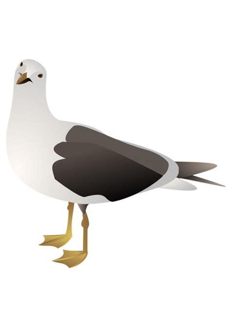 gabbiano uccelli immagine illustrazione uccello gabbiano immagini per