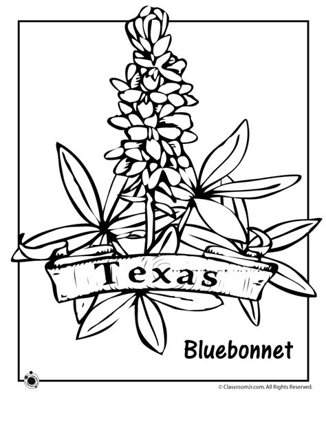 State Flower Coloring Pages Texas State Flower Coloring Bluebonnet Coloring Page
