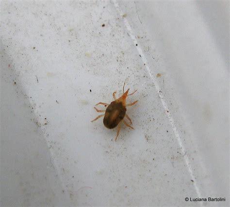 scorpioni in casa come eliminarli gli aracnidi alla classe arachnida appartengono gli acari