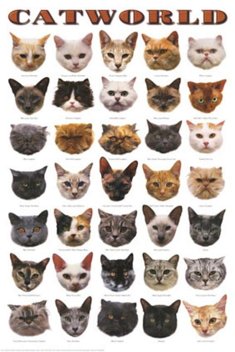 types of cats cat breed