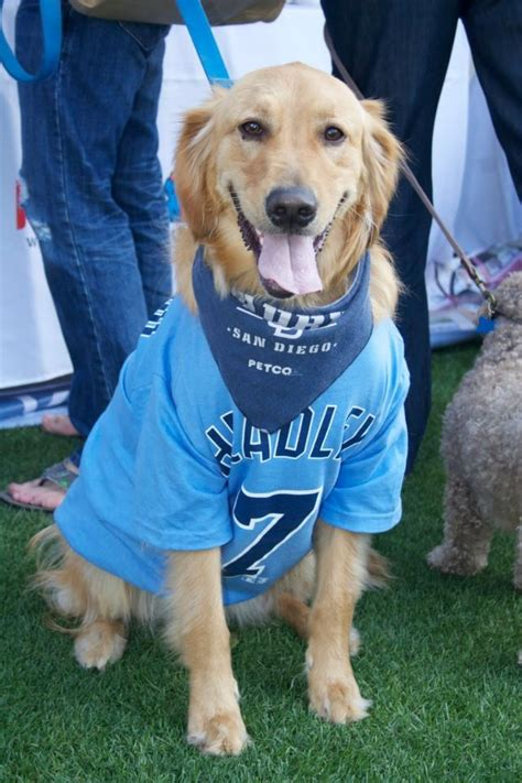 golden retriever petco 17 best images about days of summer on parks beautiful dogs and the park