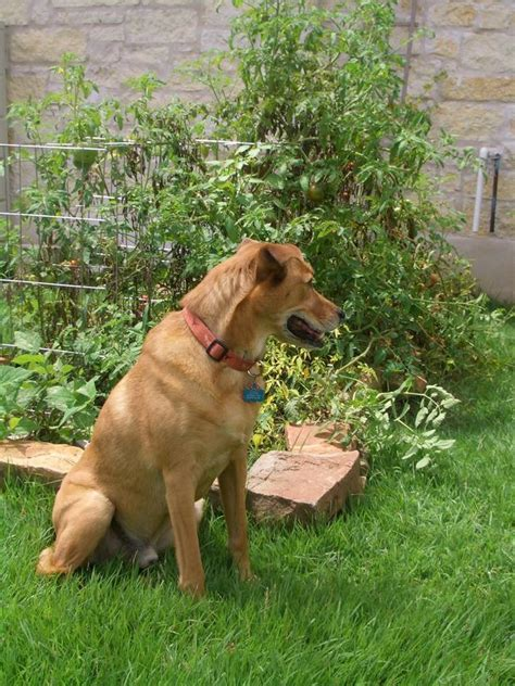 Keeping Dogs Out Of Garden by How To Landscape Fences To Keep A Out Of A Garden Home