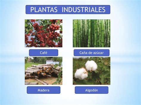 que es layout de plantas industriales variedades de plantas