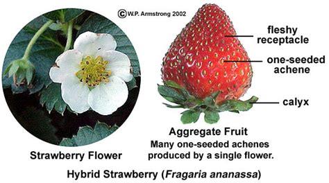 fruit definition biology fruit terminology part 4
