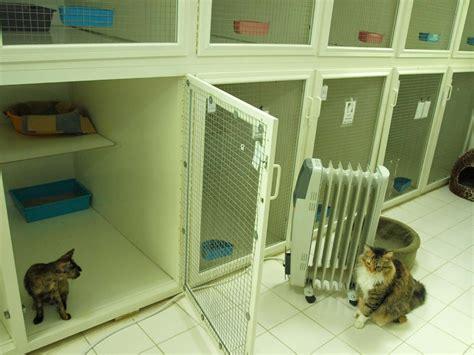 hotel kucing  kuwait catatan ardis family blog  kuwait