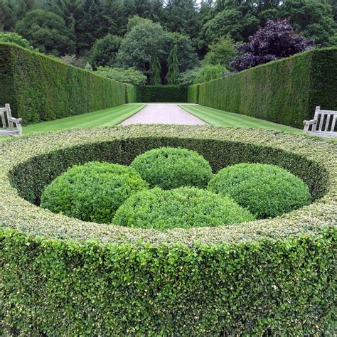 box hedge topiary buxus sempervirens box topiary balls