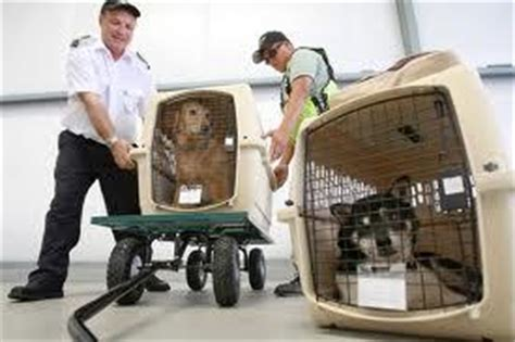 Can Dogs Fly In Cabin by Airline Pet Travel What Cargo Crate Is Best For Pet