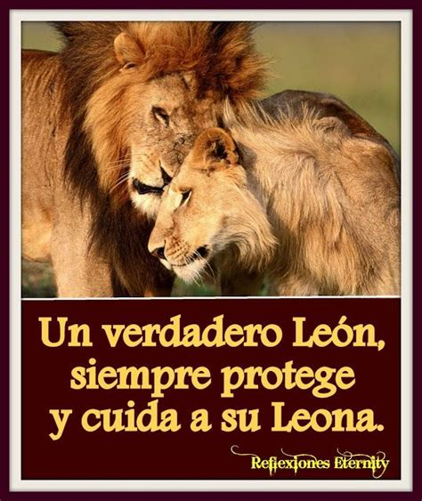 imagenes de leones lindas imagenes de leones con frases de amor 7 frases