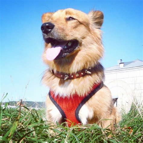 Rompi Mesh Anjing Size S Black rompi mesh anjing size m black jakartanotebook