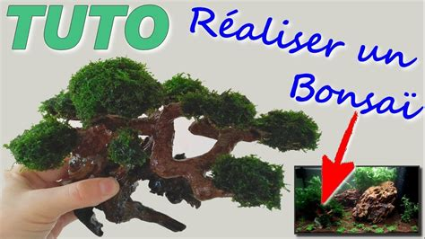 bonsai pour son aquarium tuto  youtube