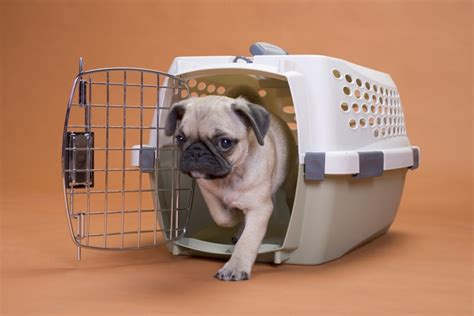 how does it take to crate a puppy how to crate a puppy