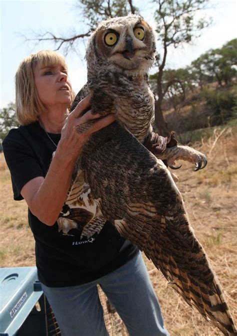 Texas Barn Owls Passion For Animals Motivates Gail Barnes Lubbock Online