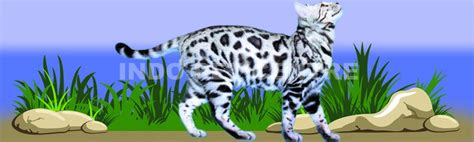Makanan Kucing Supercat Cat Baby Kitten Supercat Kaleng Indo Pet Centre From Our To Your Pet