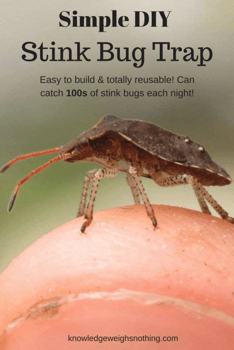 do moth balls kill bed bugs 17 best ideas about bed bug remedies on pinterest bed
