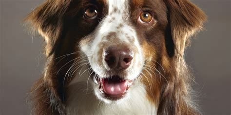 kidney diet for dogs diet for dogs with kidney disease huffpost uk