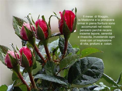 fiori mese di maggio buon mese di maggio b 03aug51