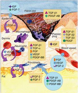 infiammazione vasi sanguigni infiammazione