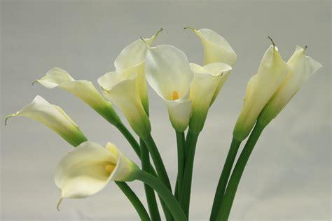 how to draw a calla lily flower typesofflower com