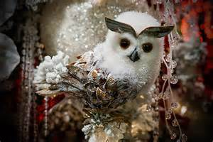 Snowy owls for christmas pictures to pin on pinterest
