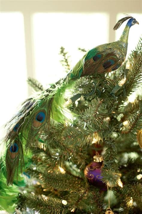 images  peacock christmas  pinterest