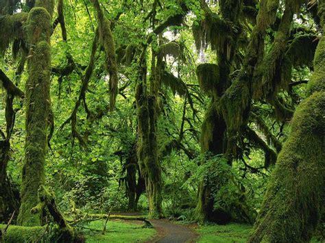 imagenes 3d bosques foto de bosques imagen de bosques gigante fotos e