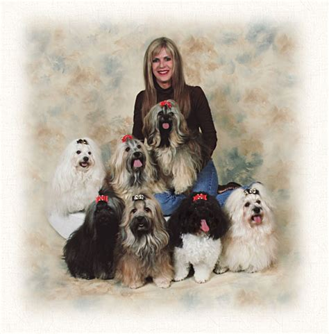 havanese breeders washington mcguire s lovable havanese akc ofa registered havanese puppies
