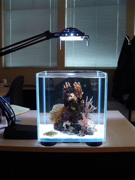 small lighting aquarium design image  pictures