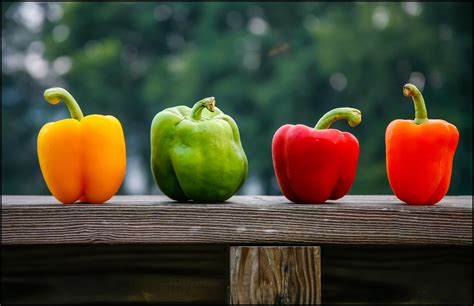 colored peppers a guide to growing peppers love the garden