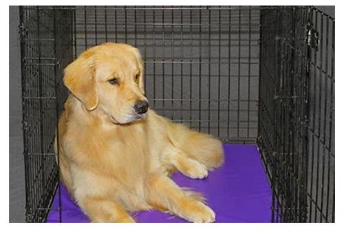 dog beds and crates coupon