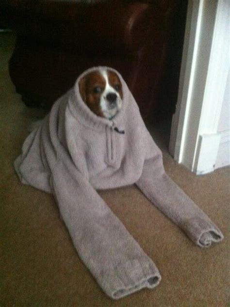 puppies wearing clothes dogs wearing human clothes to wear human clothes