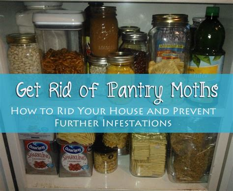 how to just about anything get rid of pantry moths
