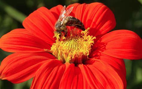 juegos de alimentar animales gratis abeja alimentar fondos de pantalla abeja alimentar fotos