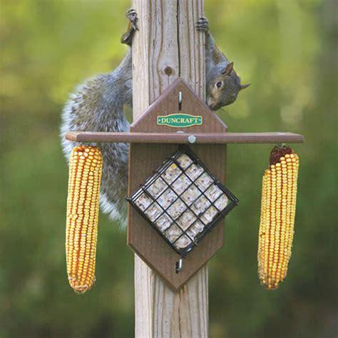 duncraft com duncraft 4079 eco squirrel corn suet feeder
