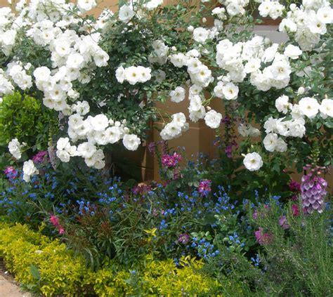companion planting   rose garden sa garden  home