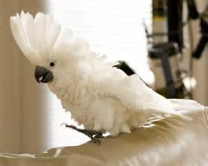 Parrot pet for adoption related keywords amp suggestions parrot pet