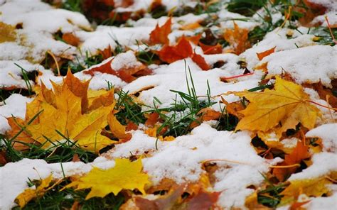 photo themes for november november windows 10 theme themepack me