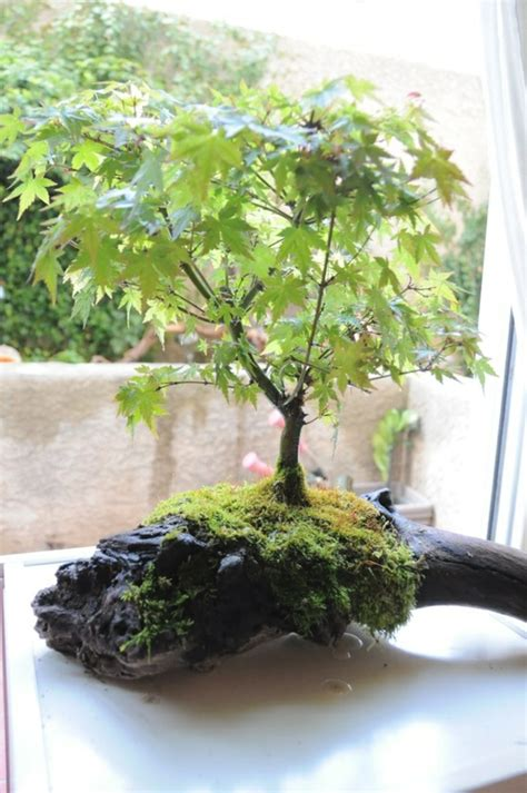 Garten Bonsai Selber Machen 4485 garten bonsai selber machen garten bonsai erfolgreiche