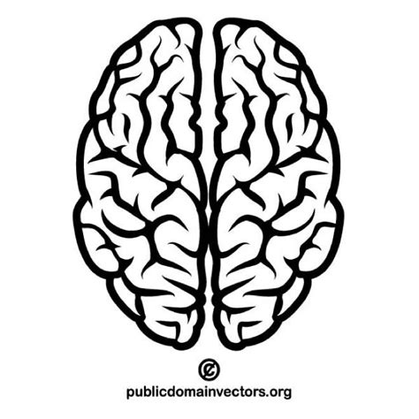 brain clipart brain vector image at vectorportal