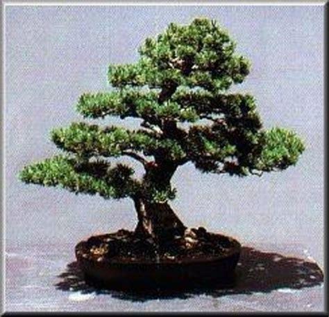 bonsai masterclass all you need museo del bonsai marbella all you need to know before you go tripadvisor