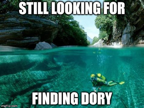 Finding Meme - still looking for finding dory imgflip