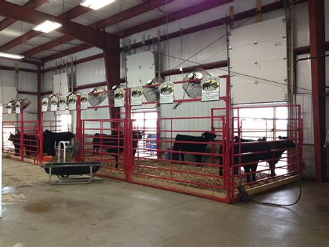 Show Barns show barn showcase horn livestock show barn horns and show cattle