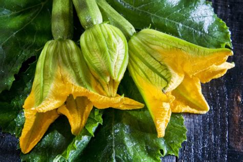 come fare i fiori di zucchina ricette con i fiori di zucca mamma felice