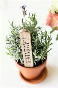Plant Favors by Plant Wedding Favours Ideas Succulent Wedding Favours