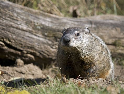 groundhog day define the origin of groundhog day