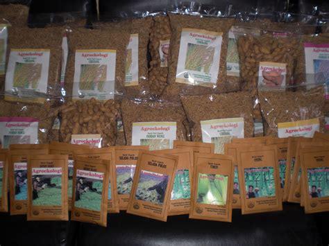Benih Jagung Hibrida Pioneer benih lokal organik untuk kedaulatan petani serikat petani indonesia