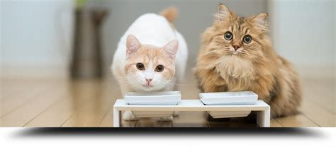 alimentazione gatto alimentazione nel gatto