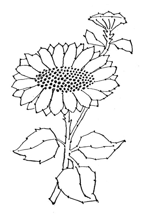 printable sunflower template embroidery pattern sunflower line the graphics