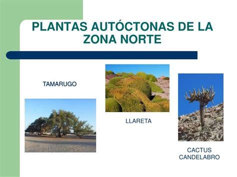 imagenes de flores de la zona norte ppt la importancia de las plantas powerpoint